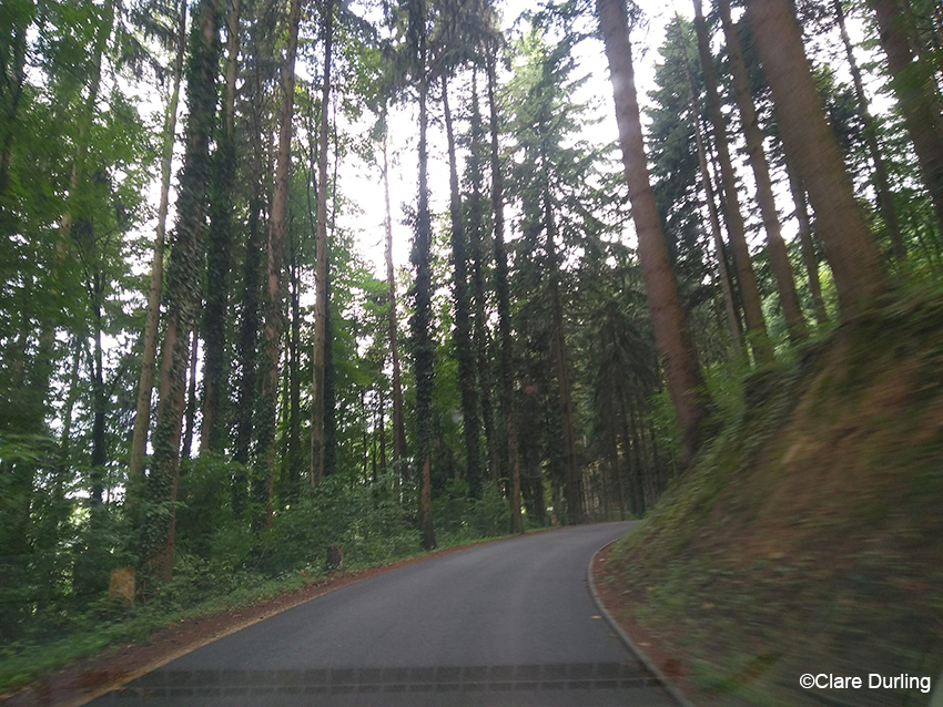 Black-Forest Driving Road